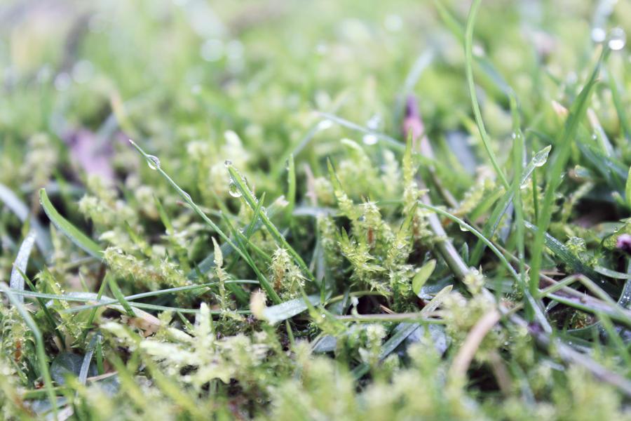 Grass by Astrazzz