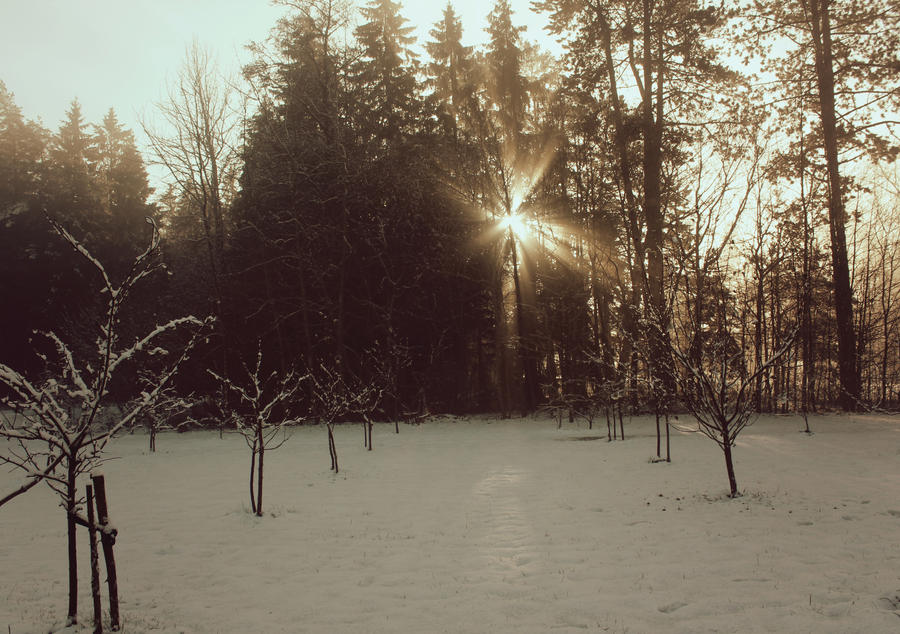 winter day with sun by Astrazzz