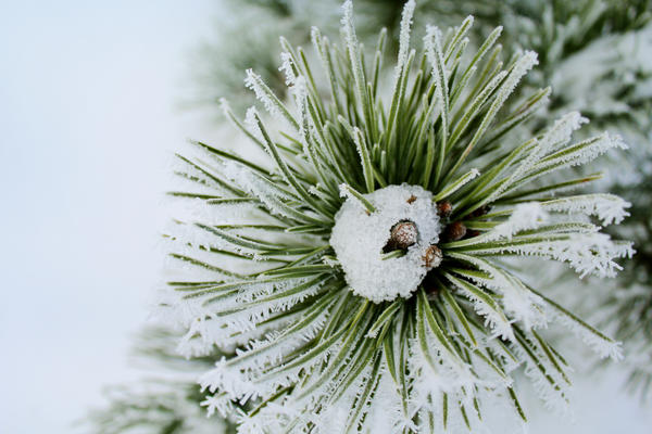 Snow by Astrazzz