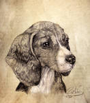 Bagel the Beagle in Pencil