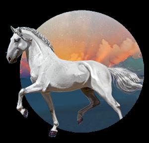 shilohs's Profile Picture