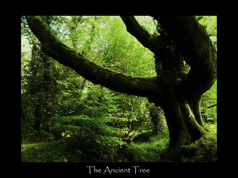 The Ancient Tree by Lord-Dip