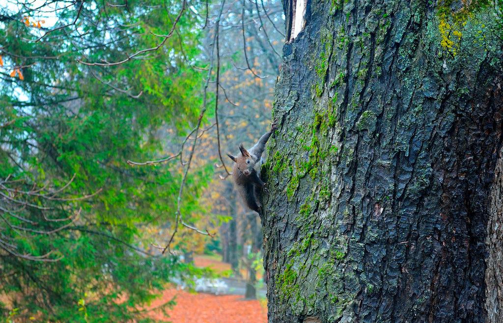 Spider-Squirrel by MihneaCernat