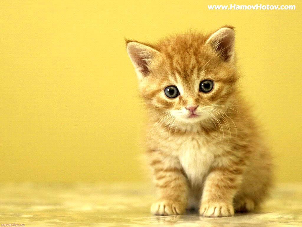 Cute Kitty 1 by DesireeUknown on DeviantArt