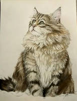 Realistic cat by Ycraine