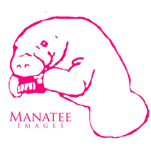 manatee-images's Profile Picture
