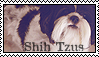 Shih Tzu Stamp by GuntherSmith