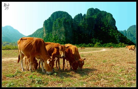 Moos in Vang Vieng