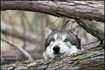 Suddenly...wolf