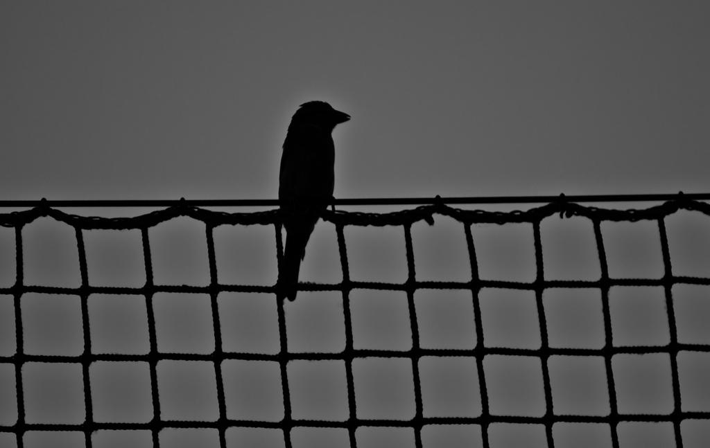 on the fence by Livath
