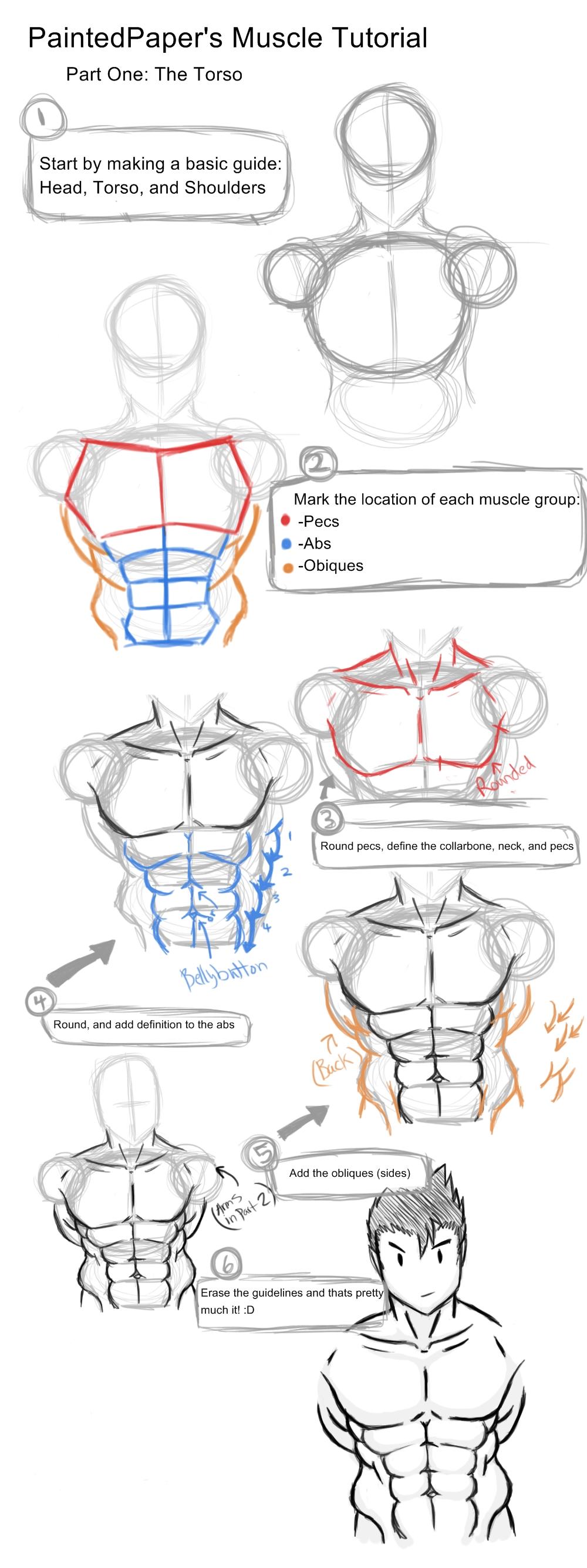 Big Muscles Tutorial - Part 1 by paintedpaper on DeviantArt