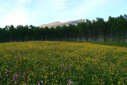 :: Flowery Meadow ::