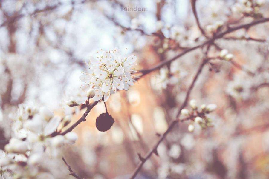 Spring III by Raindom