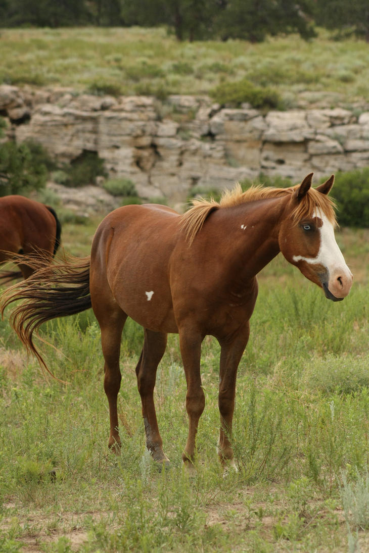 Danger has come on the wind [open] Wild_Horses_3_by_celtic_stock