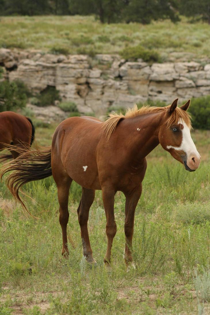 Chocolate X Staramboli  Wild_Horses_3_by_celtic_stock