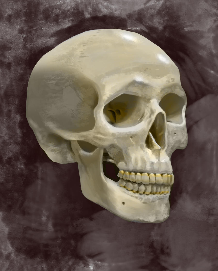 Human Skull Digital Painting