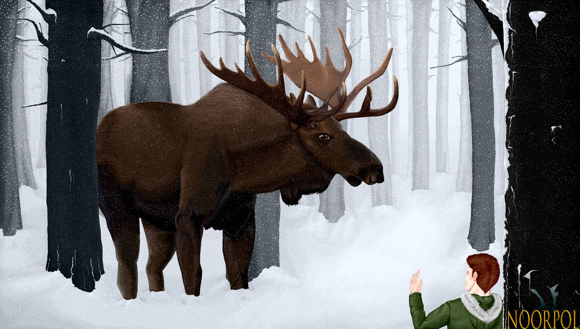 Moose by NOORPOL
