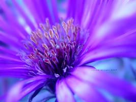 ::Crazy Beautiful:: by onixa