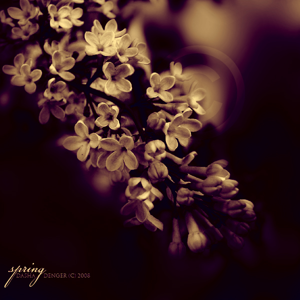 :SPRING: by onixa