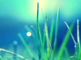 :GRASS: by onixa