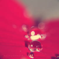 :RAIN DROPS: by onixa