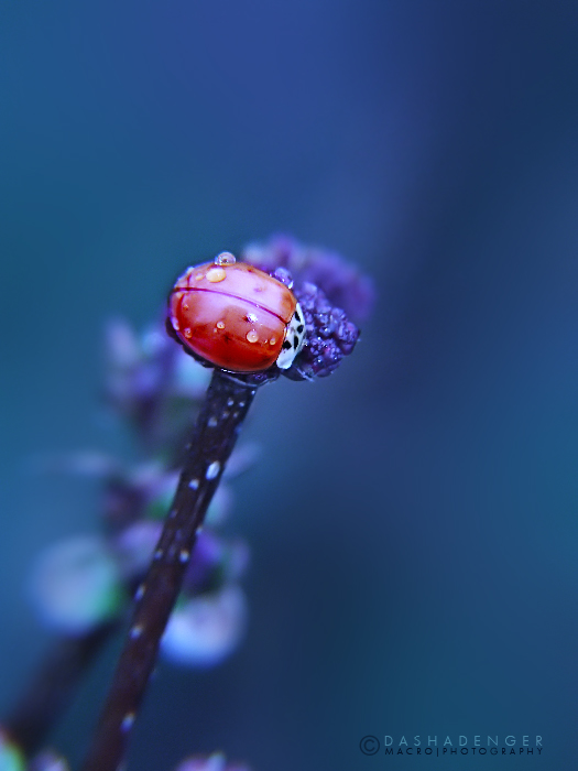 :MADAM BEAUTIFUL: by onixa