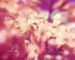 :Lilac II: by onixa