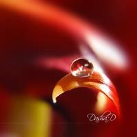 ::Crystal Clear:: by onixa