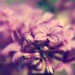 :lilac: by onixa