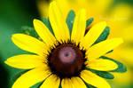 The Eternal Sunshine