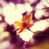 springs ends... by onixa