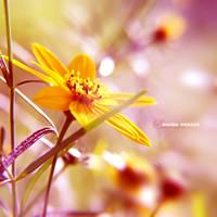 enchanted world... by onixa