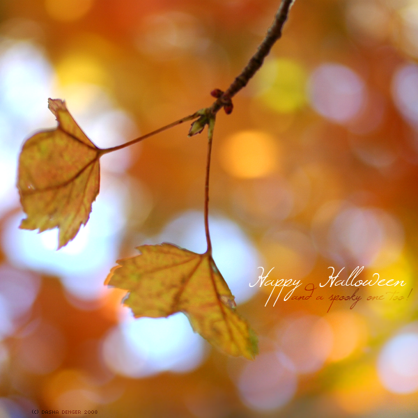 Happy Halloween by onixa