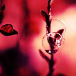 ::bubbly heaven:: by onixa