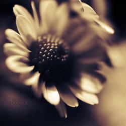 Dark Memories I by onixa