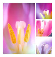 :Tulips Collage: by onixa
