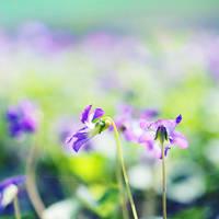 .: Violets Fantasy II :. by onixa