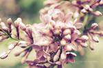 .: Sweet Nectar :.
