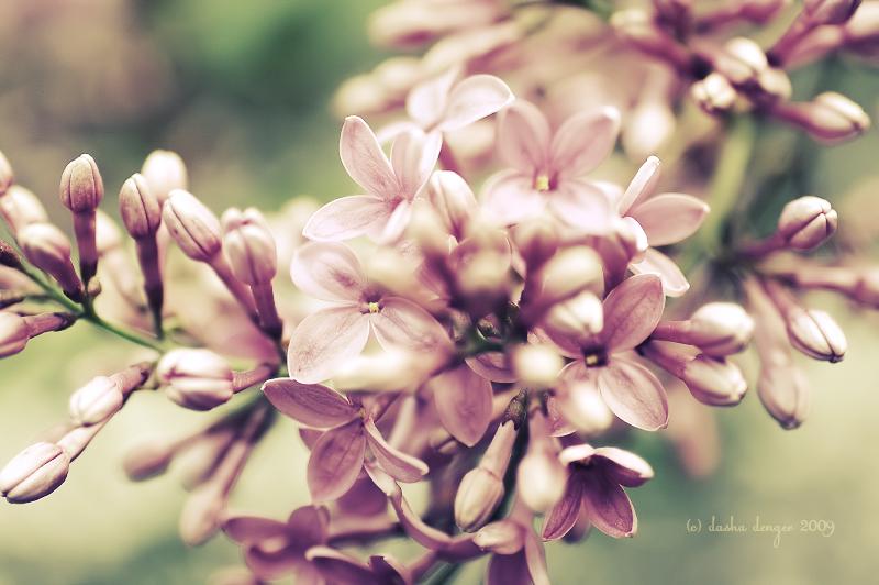 .: Sweet Nectar :. by onixa