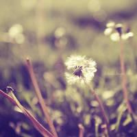 Fields of Joy by onixa