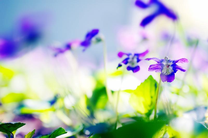 Spring... by onixa