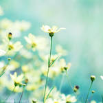 Beauty Within.. by onixa