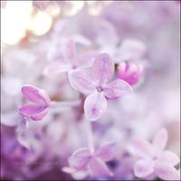 Sweet Lilac Scent II by onixa