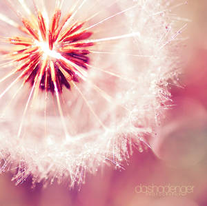.: Crystal Light :.