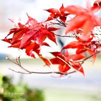 Leaves of Love by onixa