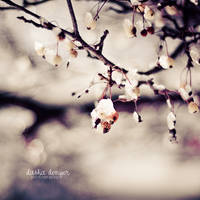 Winters Calling by onixa