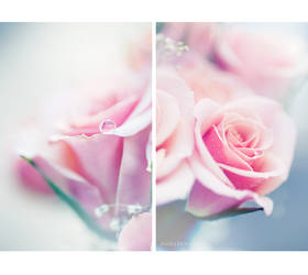 Pure as Roses...
