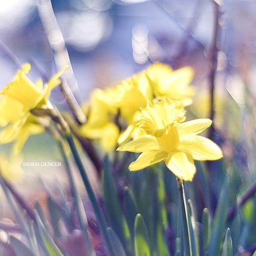 Happy Monday by onixa
