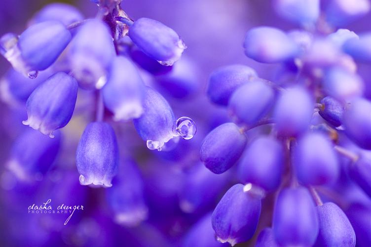 .: Blue Bells :. by onixa