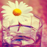 ...the glass is half full by onixa